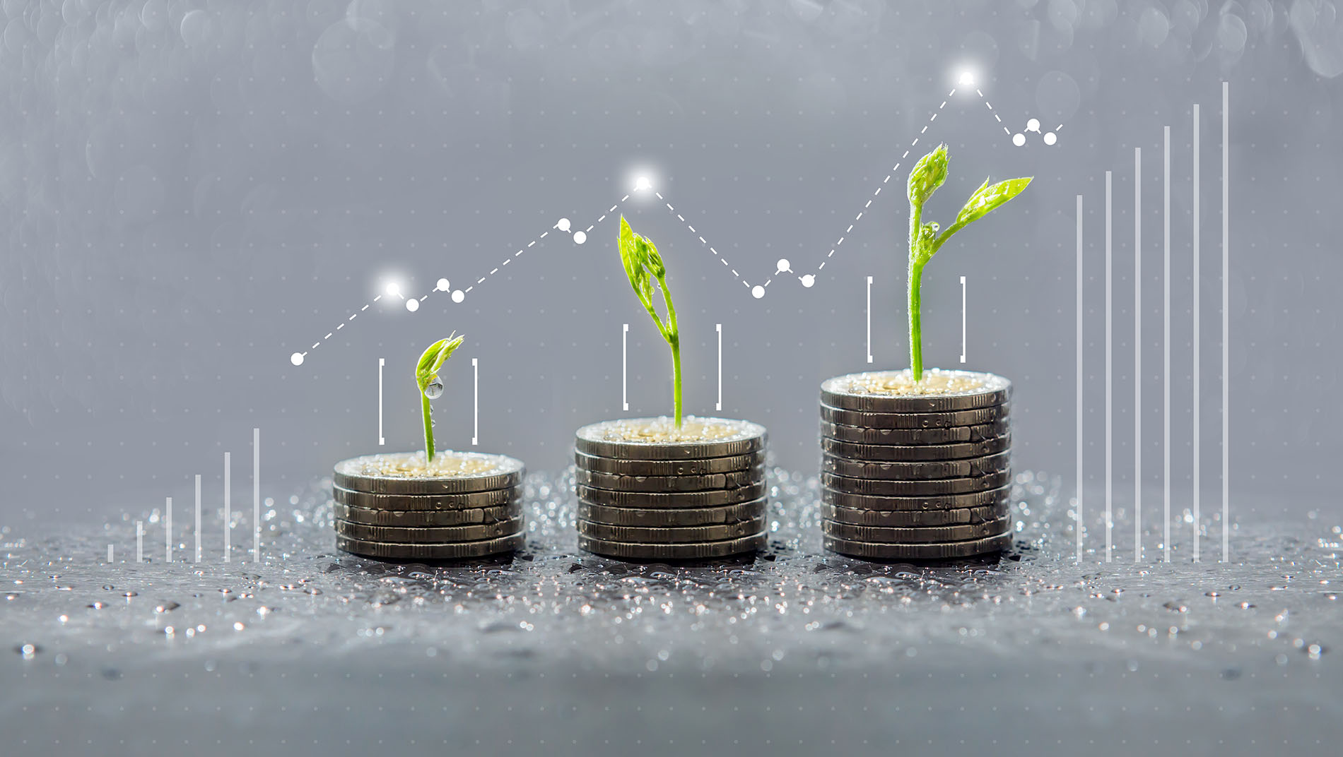 Trees growing on coins, sustainable finance